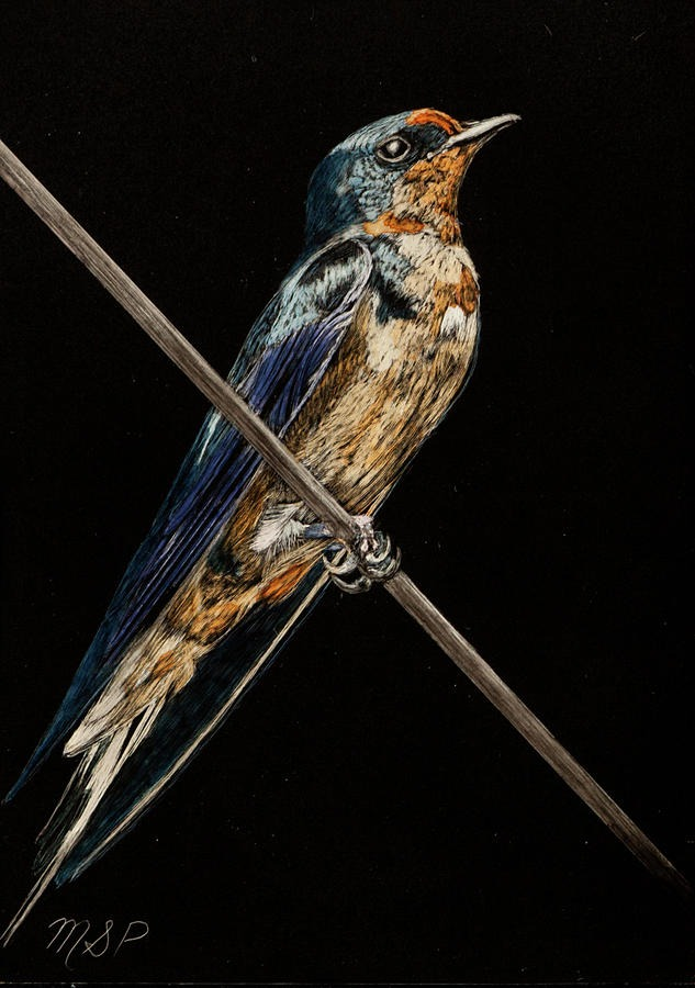 Bird On A Wire - Margaret Pardy