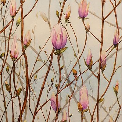 Budding Magnolia by Charlene Nickels
