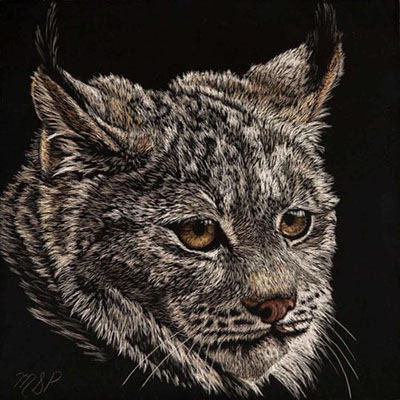 Lynx by Margaret Pardy