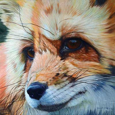 Red Fox by Kelly McNeil