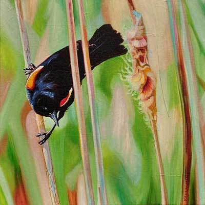 Red Winged Black Bird by Kelly McNeil
