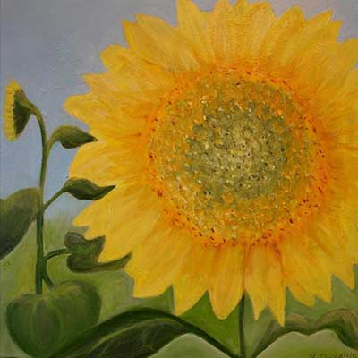Helen Duplassie - Sunflower